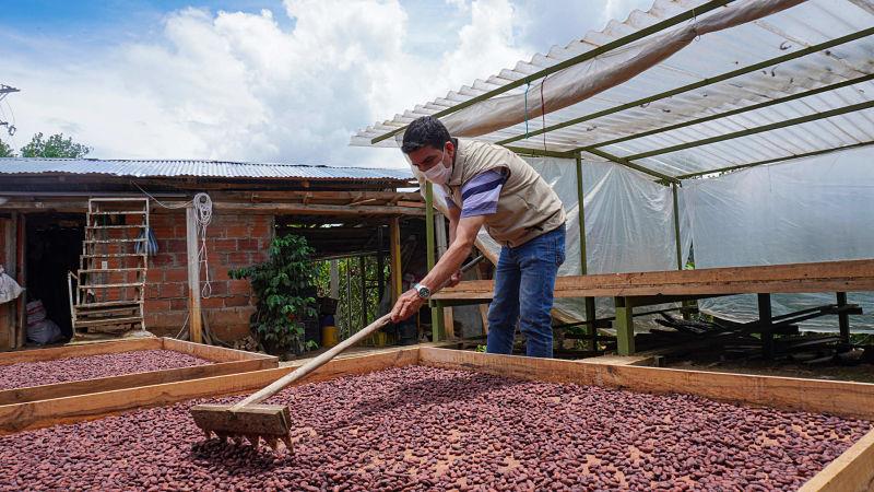 72 productores de cacao en Santander han comercializado más de 48 toneladas de grano especial con Hallbar Kakao